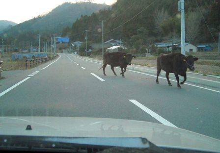 福島県は本当に「自立再生」に向かっているのか?
