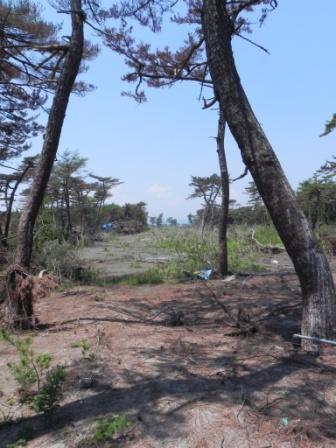 津波の傷跡深い海岸林、その再生策は