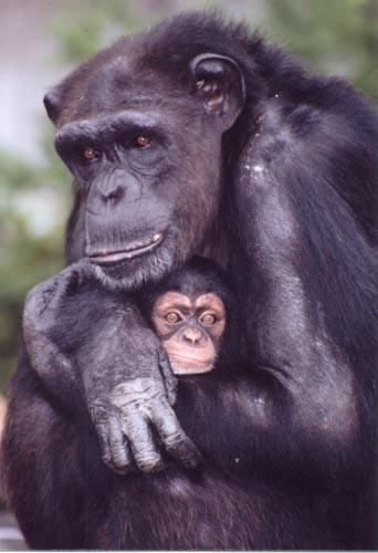 【科学朝日】想像するちから-チンパンジーが教えてくれた人間の心(collaborate with 朝日ニュースター、8月11日放送)