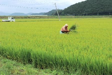 ビジョンなくして農業は強くならない