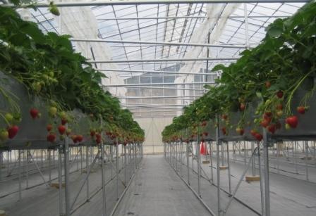 イチゴに見る農業経営の現実