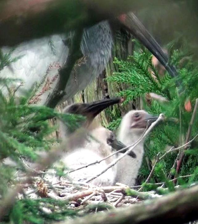 トキ誕生――さらなる生態系の回復をめざせ