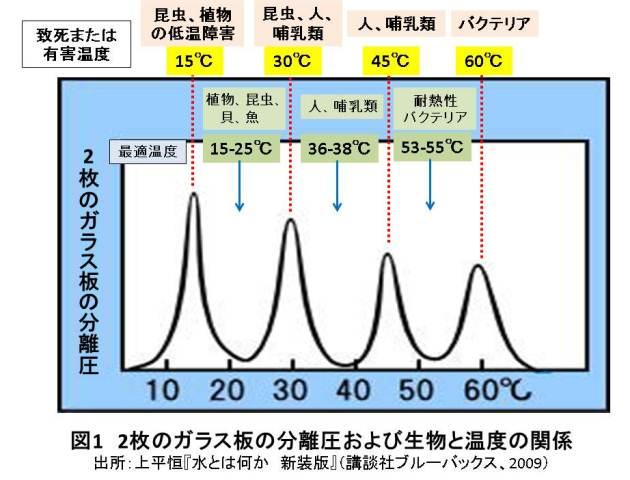 人間の最適体温と水の性質の意外な関係