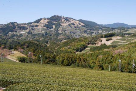 茶どころの「茶草場」は農業遺産になるか(下)