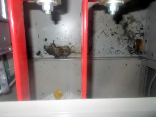 原発鳴動、ネズミ一匹 〜心理学から見た停電事故