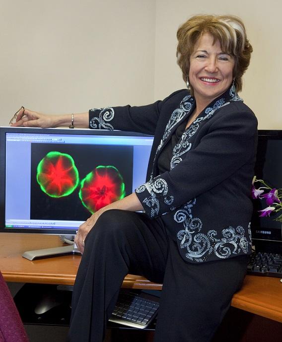 乳がん死防止法の発想転換を迫る女性研究者の最新成果