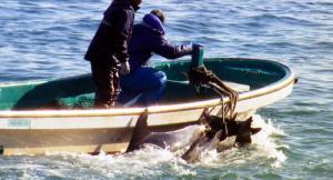 「イルカを残酷に殺すな」という主張には異議を唱えたいのだけど……