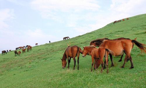 戦争が変えた日本の馬
