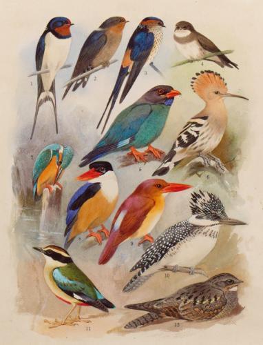 鳥学と歩んだ画家 小林重三