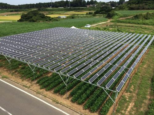 ソーラーシェアリングで広がる可能性