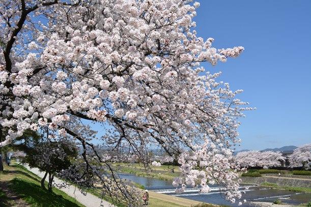 なぜに外国人観光客は京都へ行くの?!