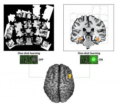 脳の一発学習の謎を解く