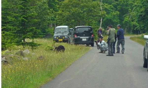 知床のクマを追い詰めるカメラマンの至近距離撮影