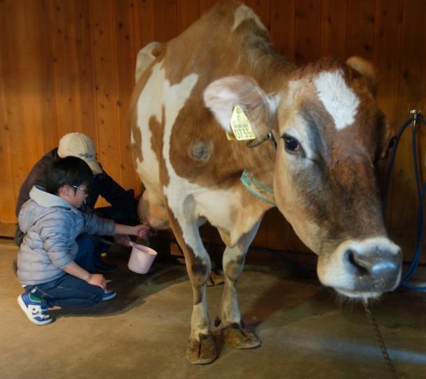酪農家が経営努力をすればするほど乳牛が減る?