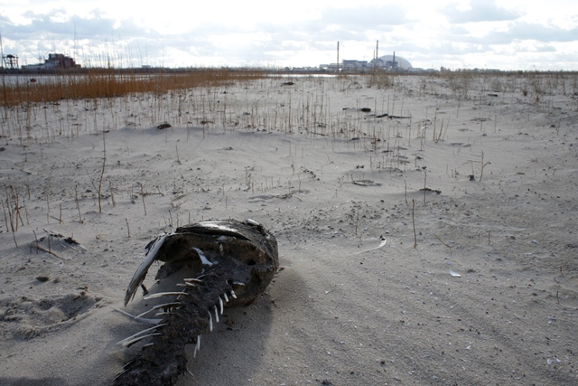 再び内部被ばくが増えているウクライナ汚染地帯
