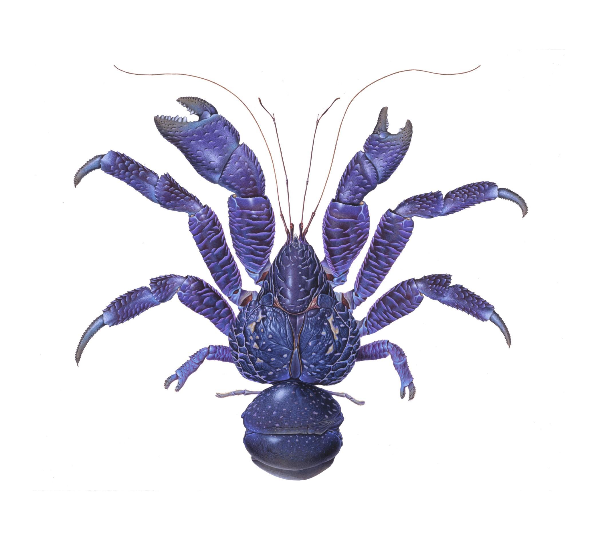 なぜ脊椎動物の足は4本で昆虫は6本なのか