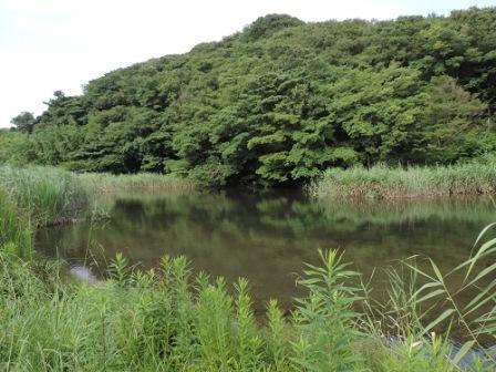 ひっそりと扉を開けた「池子の森」
