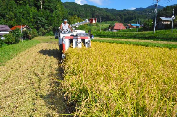 輸入米価価格の偽装をめぐる本当の問題とは何か