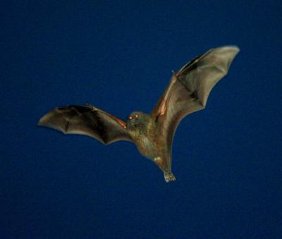 動物はなぜ空を飛ぶようになったのか