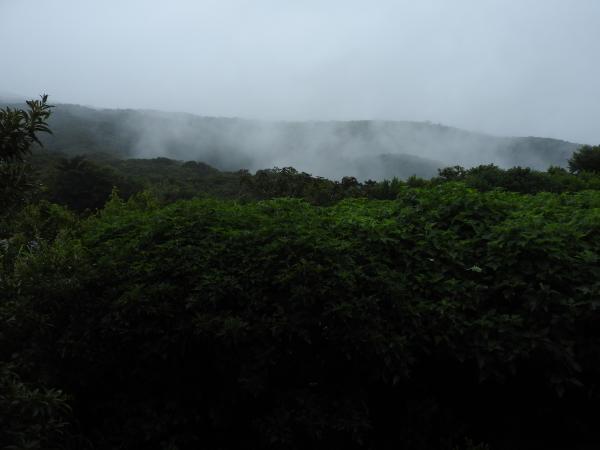 コスタリカの森に暮らす「探検昆虫学者」