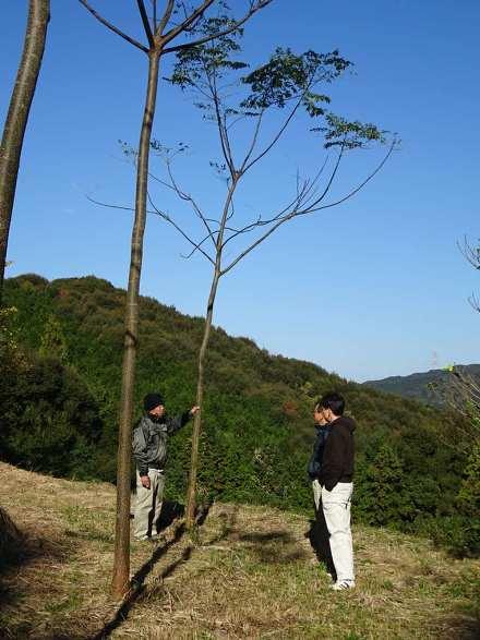 早生樹センダンで林業のイノベーションを