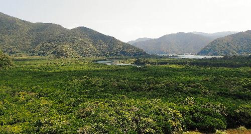 ブルーカーボン:海洋生態系が吸収する二酸化炭素