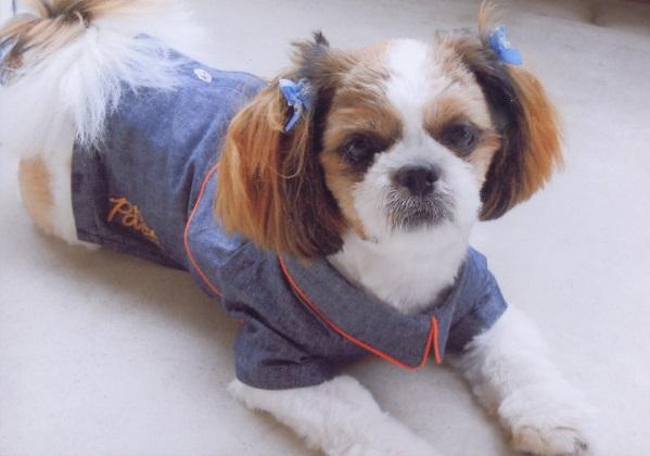 年末年始に犬を飼い始める人が多い理由(上)
