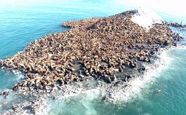 トドと漁業と知床世界遺産の共存を図る