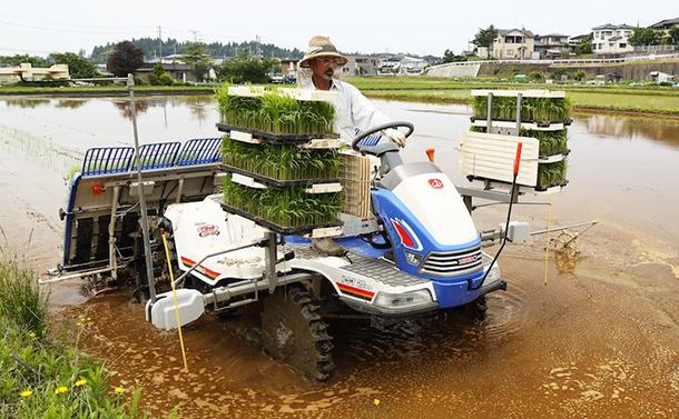 現代農法を見直せば、赤トンボはまた空を舞う