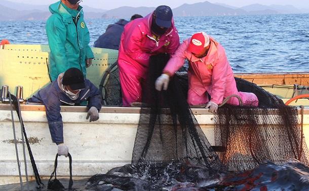 日本の漁業の再生か、小規模漁業の切り捨てか