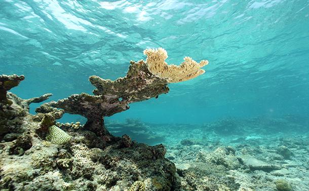 沖縄の未来を奪うサンゴ礁の消失