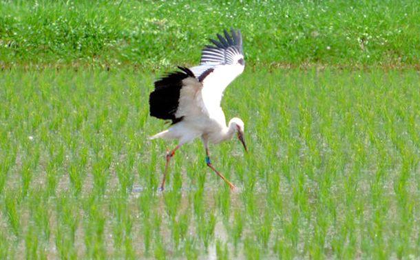 世界でいちばん持続可能な水田農業を潰す日本農政