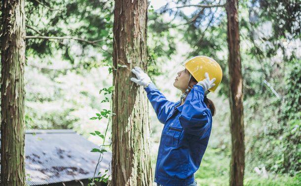 林業界の人手不足と外国人労働者問題