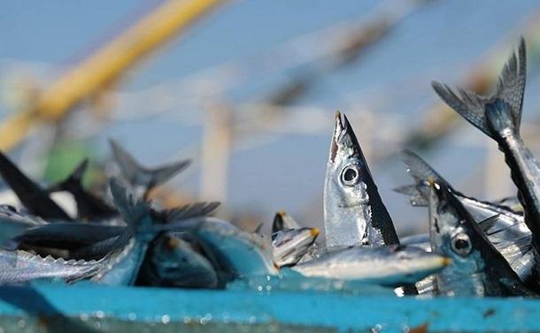 サンマの国際漁業規制が意味するもの