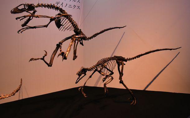 「恐竜博」が今年開かれたわけは?