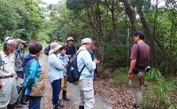 沖縄やんばる「イタジイの森」に皆伐の危機