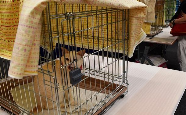 東京都のペット殺処分ゼロはいかに実現されたか