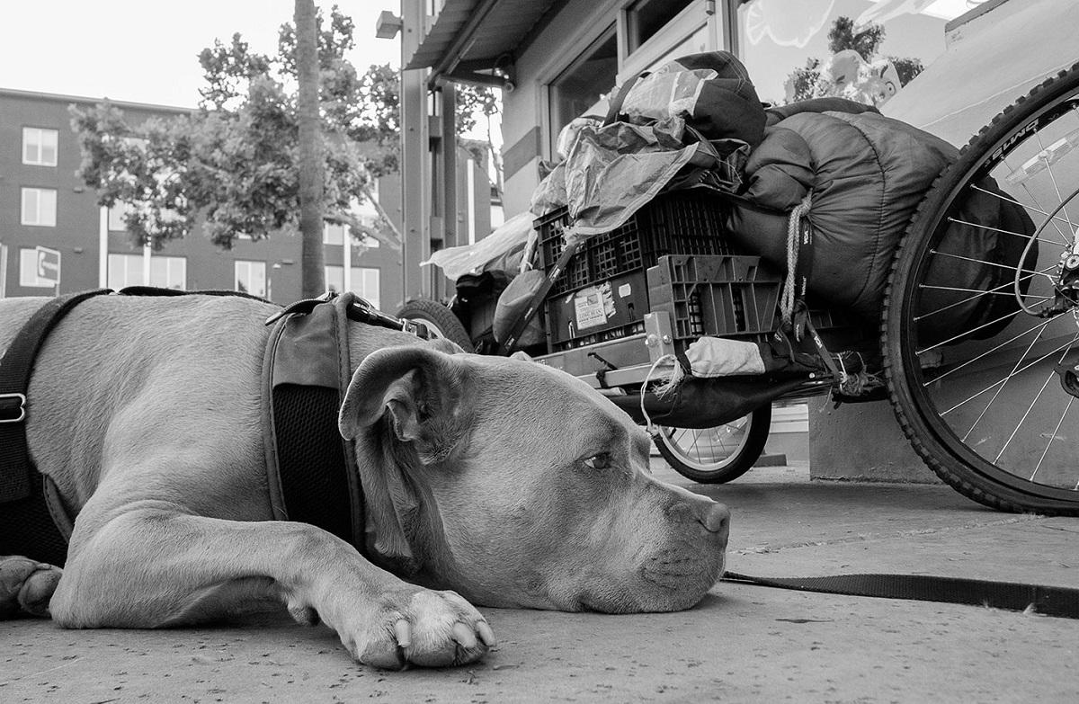 アメリカ西海岸のホームレス写真家が撮る幸福な犬たち