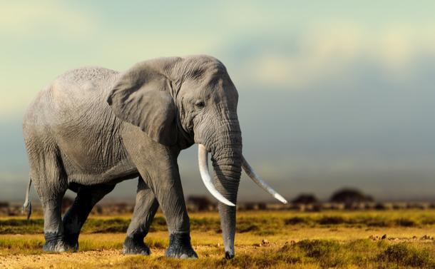 「野生動物を人間は利用すべきでない」のか