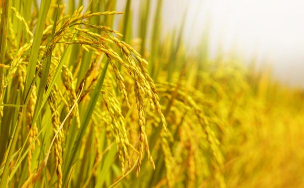 豊作を嘆く農協~菅首相に既得権打破の覚悟はあるか