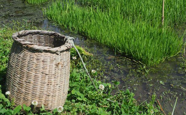 原子力災害後も有機農家は土地と向き合い消費者とつながる
