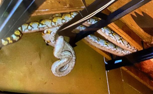 アミメニシキヘビ脱走事件から学んだ3つのこと