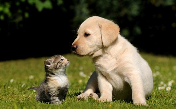 愛情につけこむ、ペットを狙う犯罪にご用心